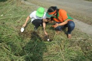 tree planting-1