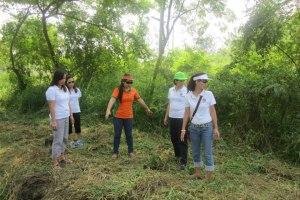 tree planting-2